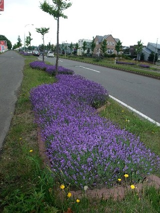 2008_07130034